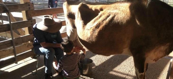 The Best Kid-Friendly Getaways Near Sydney On A Budget