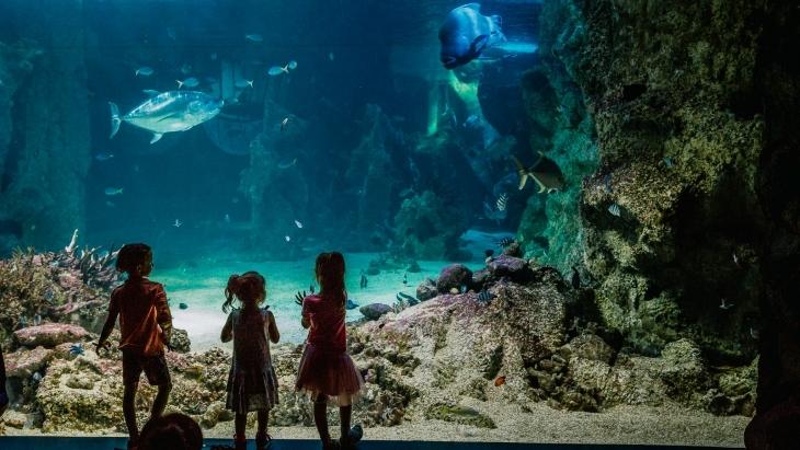 Check Out Both Sydney Sea Life Aquarium & Sydney Wild Life