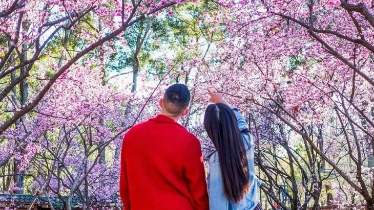 The Sydney Cherry Blossom Festival Is Back For 2020 Has Been Ellaslist,Wall Stickers For Bedroom Amazon